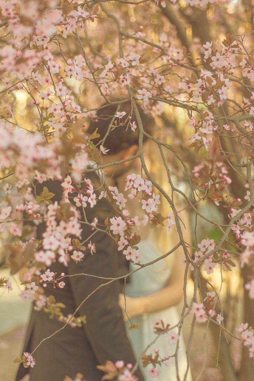Pink Flowering Tree Against Married Couple