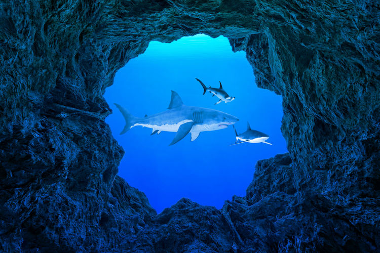 View Of Sharks Swimming In Sea
