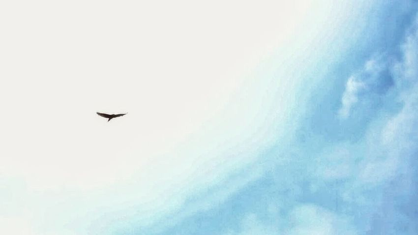 Photography Street Photography Animals Bird Photography Sky Sky And Clouds Hangzhou
