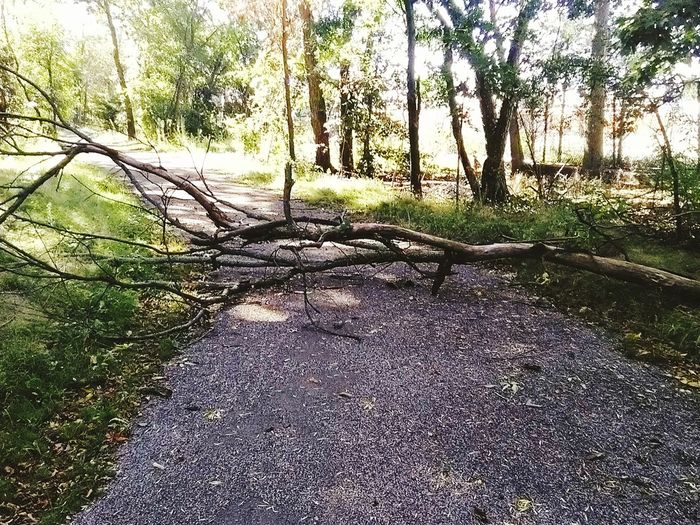Tree Nature Outdoors No People Shadow Tree Trunk Beauty In Nature Sunlight Growth Fallen Tree After The Storm