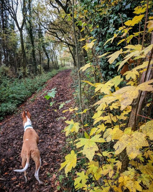 Dog Outdoors Nature Shropshire Landscape Landscape Tree Perspectives On Nature Autumn Walking In The Woods English Countryside Tranquility Shropshire Countryside Beauty In Nature Tranquil Scene Dog Walking Walking Shropshire Freshness Curiosity Be. Ready.