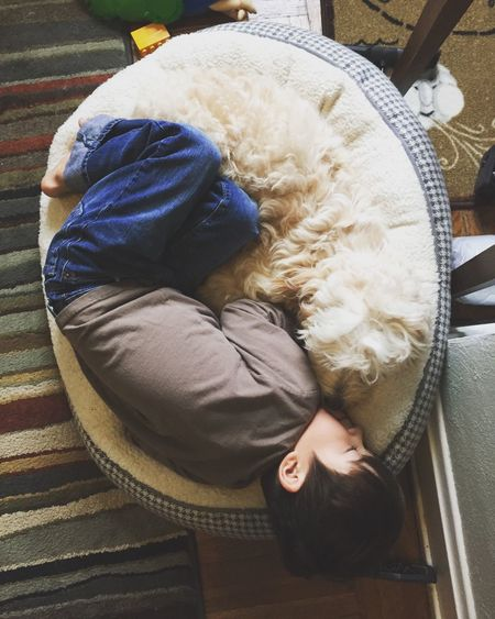 High angle view of boy sleeping with dog on pet bed at floor