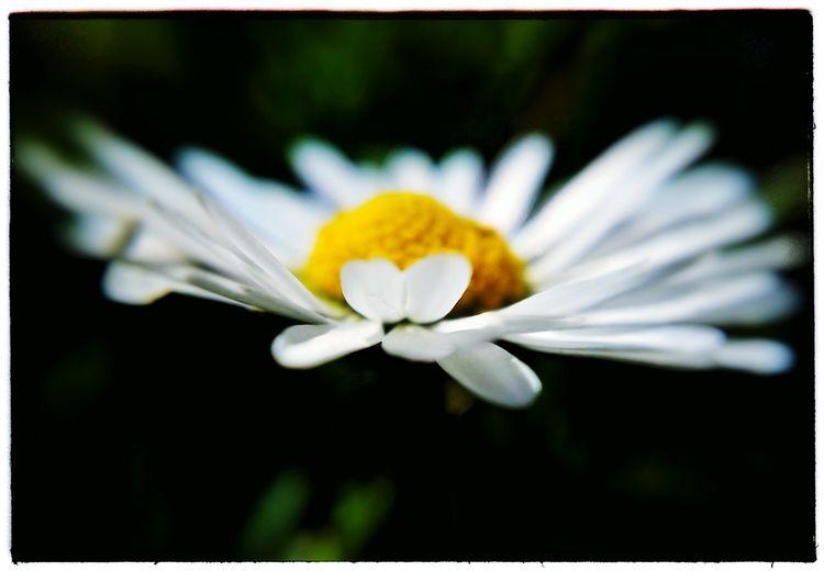 Because you are a delicate flower. Daisy Maua Upendo Sunshine