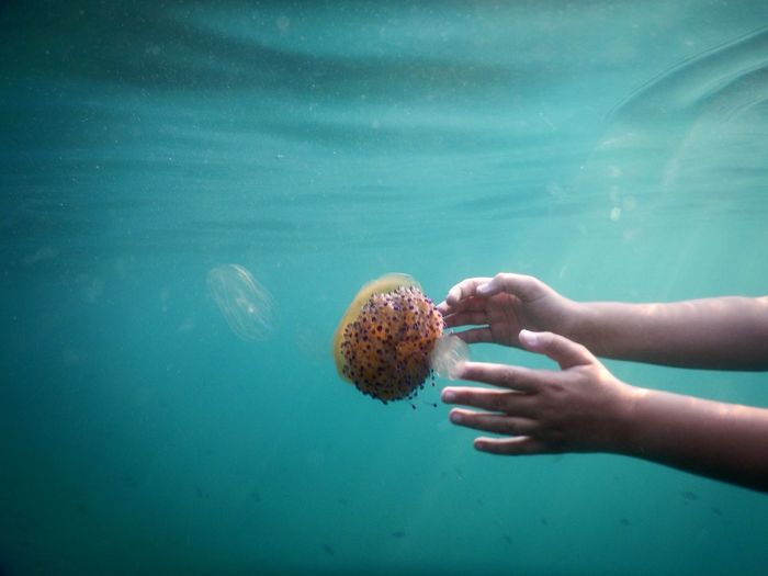 Cropped Hand Of Person With Jellyfish Swimming In Sea
