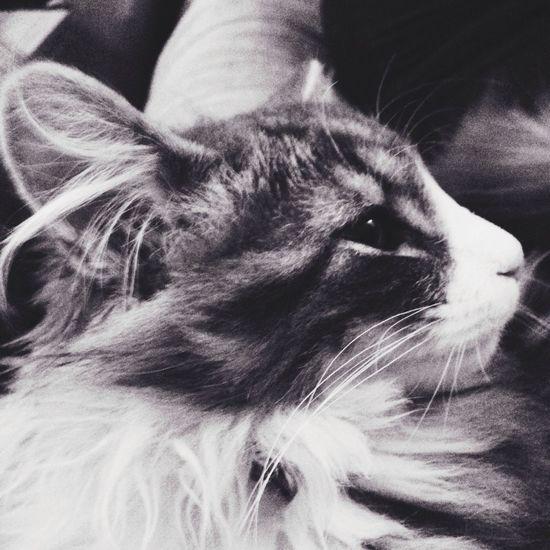 New cat in town: Aslan aka Mi Vevey Bea's Mood  Peaceful Evening My Noir Life Bnw_switzerland
