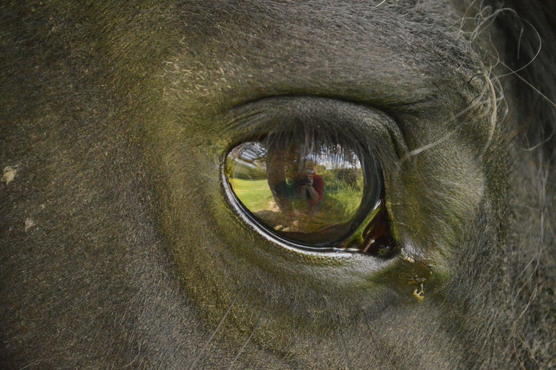 Black Horse Close-up Creativity Eye Eye Off A Horse Horse Eye One Animal Reflection