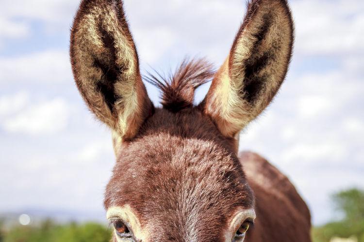 Close-up of donkey against sky