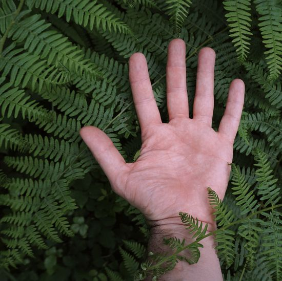 hand with a leaves in the nature, man hand with plants Hand Finger Body Part Leaf Leaves Color Colors Colorful Nature person Holding Plant Human Body Part Human Hand One Person Real People