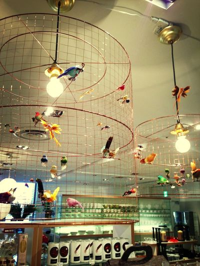 Light Birds Interior Design