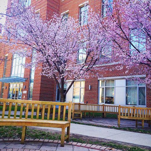 Spring Into Spring Denison University Spring Flowers Springtime Flowering Dogwood Readingoutside