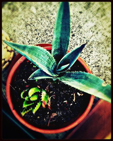 Garden Plant Life Succulents Agave