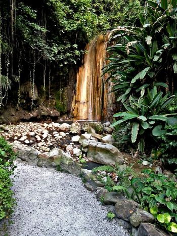 Hot springs Saint Lucia tourist attraction Waterfall Nature Outdoors Tree Water Beauty In Nature No People Day 758 Caribbean Life Saint Lucia Relaxation