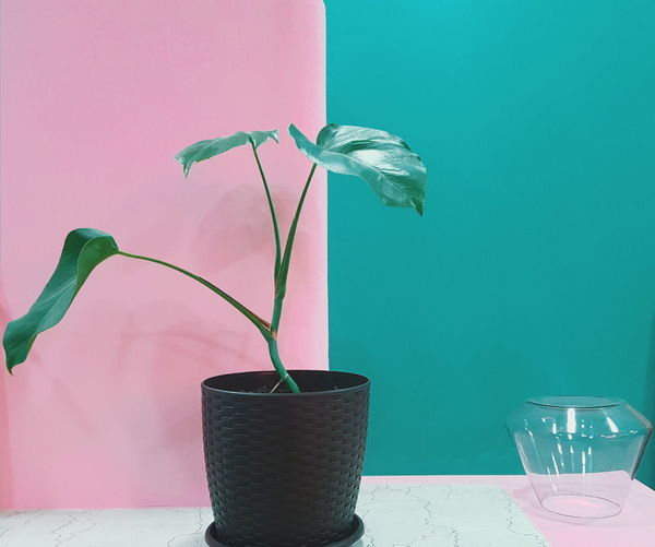 Flower Orchid Flower Head Water Vase Pink Color Table Drinking Straw Colored Background Bottle Flower Pot Blooming Plant Life Pollen Potted Plant Petal Plant Stem In Bloom Hydrangea Single Flower Stamen Fragility Bud Botany Iris - Plant Cosmos Flower Window Box Houseplant Dahlia Sunflower The Minimalist - 2019 EyeEm Awards