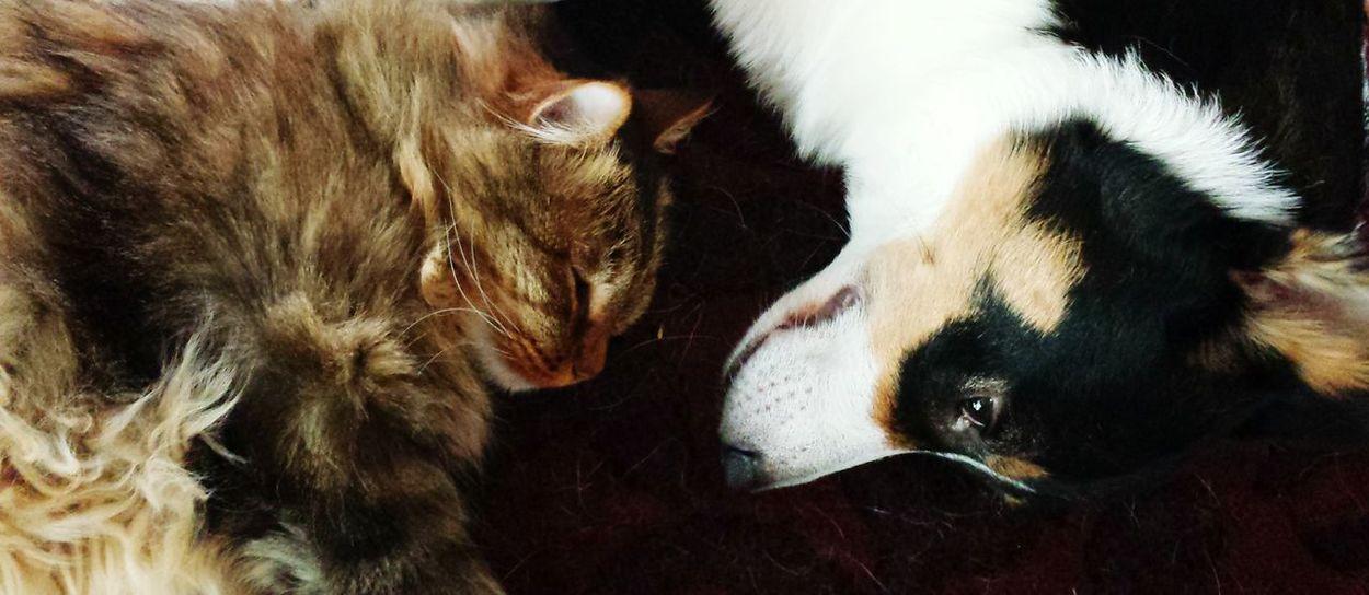 Domestic Animals Mammal Animal Themes Animal Body Part Animal Head  Pets Dog Close-up No People Animal Eye Day Cat Friends Love Yin & Yang Ying Yang Opposite The Portraitist - 2017 EyeEm Awards Pet Portraits