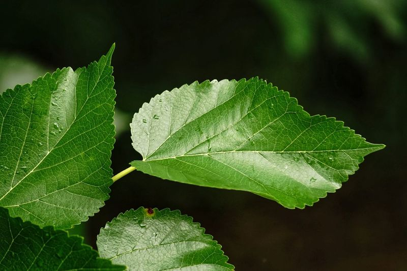 Tree Leaf Green Color Close-up Nature No People Freshness Day Plant Growth Beauty In Nature Black Background Outdoors