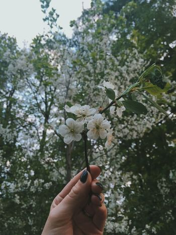 Bloom Inbloom Flowers Cherry Blossoms Cherry Vscocam Spring May