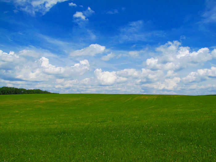 Landscapes With