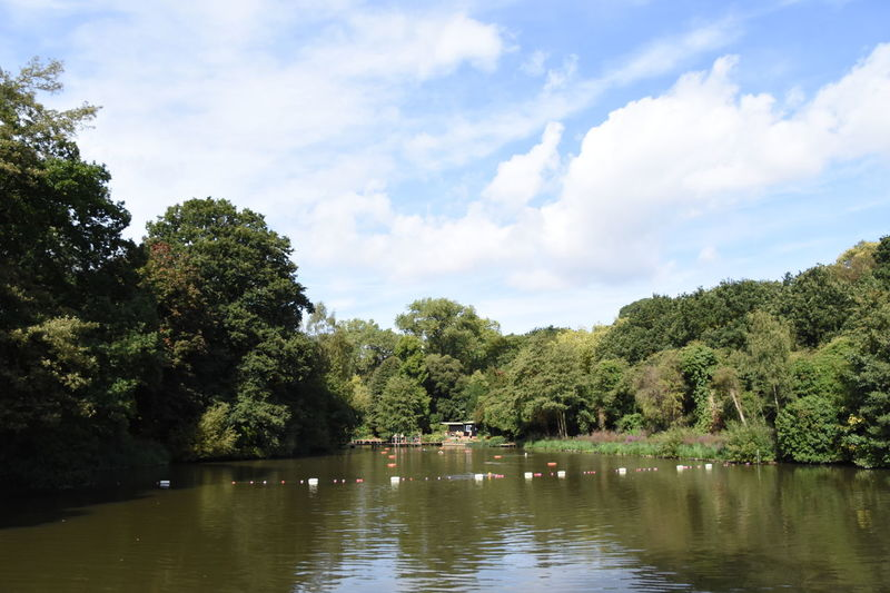 Hampstead Heath ponds Beauty In Nature Cloud - Sky Day Forest Green Color Growth Hampstead Heath Ponds Lake Nature No People Outdoors Plant Reflection Scenics - Nature Sky Tranquil Scene Tranquility Tree Water Waterfront Wild Swimming