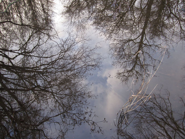 reflection of trees in the water Tree Plant Sky Branch Nature Bare Tree Tranquility Beauty In Nature No People Day Outdoors Scenics - Nature Silhouette Tranquil Scene Cloud - Sky Forest Reflections Reflections In The Water Water Brook Trout