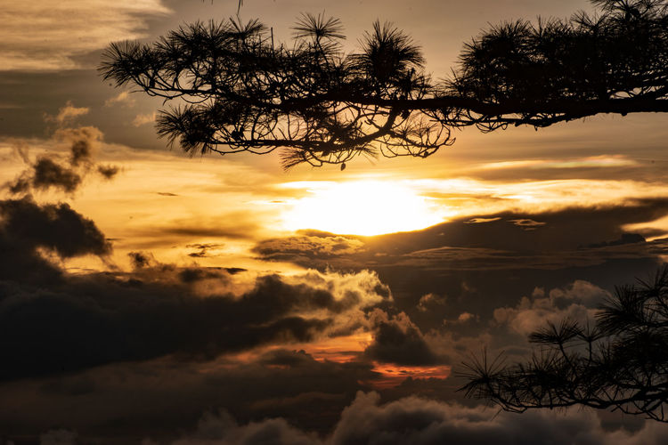 Twilight Beauty In Nature Branch Cloud - Sky Idyllic Low Angle View Nature No People Non-urban Scene Orange Color Outdoors Plant Scenics - Nature Silhouette Sky Sun Sunlight Sunset Tranquil Scene Tranquility Tree EyeEmNewHere