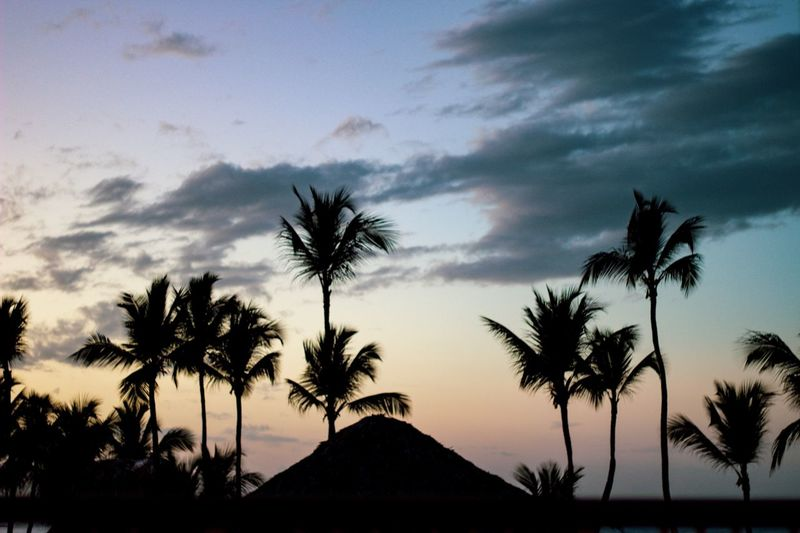 Equator sunsets Tree Sky Plant Palm Tree Silhouette Cloud - Sky Tropical Climate Beauty In Nature Sunset Nature Growth Scenics - Nature No People Tranquility Tranquil Scene Dusk Outdoors My Best Photo