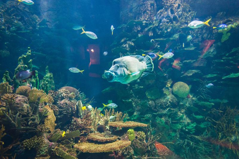 Fish Swimming Underwater