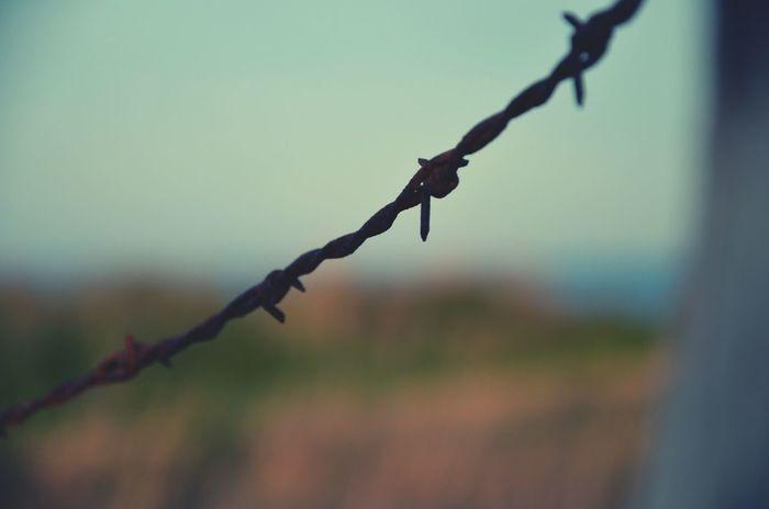 """"""" C'est un paysage désolé. Une désolation. Evidemment, ça ne veut rien dire. Un paysage ne pense pas, il ne peut pas être désolé."""" -Thomas B. Reverdy Eyeemphotography Eyeemphoto Sea Mer Ballade Sentier Bord De Mer Barbelés Dimamche En Famille"""