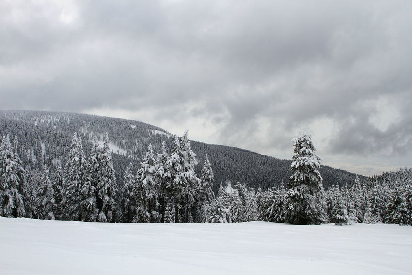 Beauty In Nature Cloud - Sky Cold Temperature Day Landscape Mountain Nature No People Outdoors Scenics Sky Snow Tranquil Scene Tranquility Tree Weather Winter