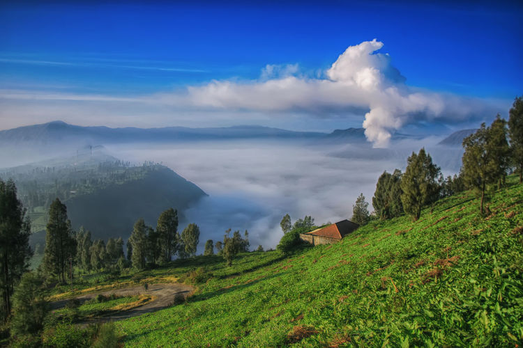 Sisi Lain Gunung Bromo Indonesia_photography INDONESIA Probolinggo Landscape Mountain Gunung Erupsi Gunung Bromo Bromo Mountain Sky Cloud - Sky Scenics - Nature Environment Tranquil Scene Beauty In Nature Plant Tranquility Non-urban Scene Green Color Nature No People Land Tree Day Blue Idyllic Remote Outdoors