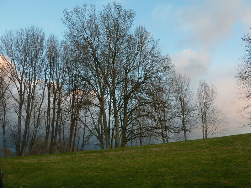 Bare Tree Beauty In Nature Day Grass Growth Nature No People Outdoors Sky Tranquility Tree