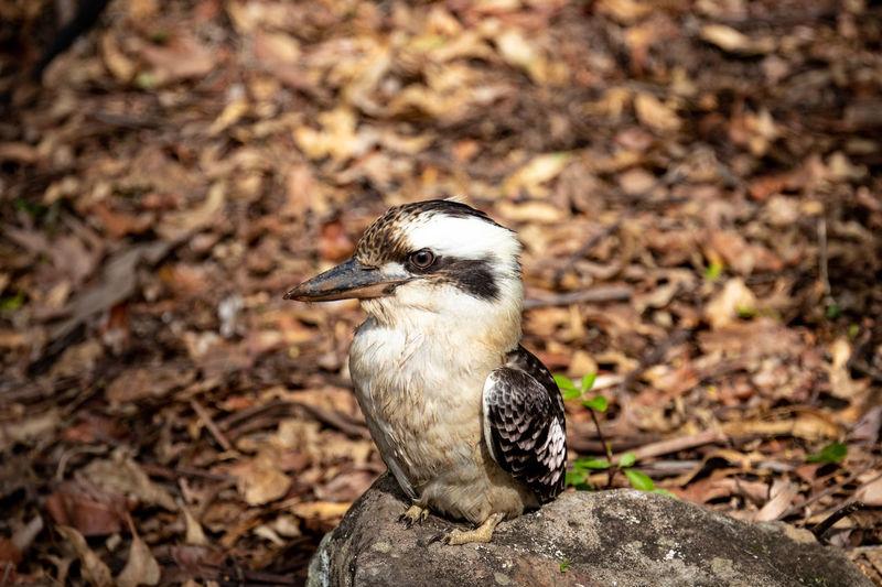 Close-up of bird on land
