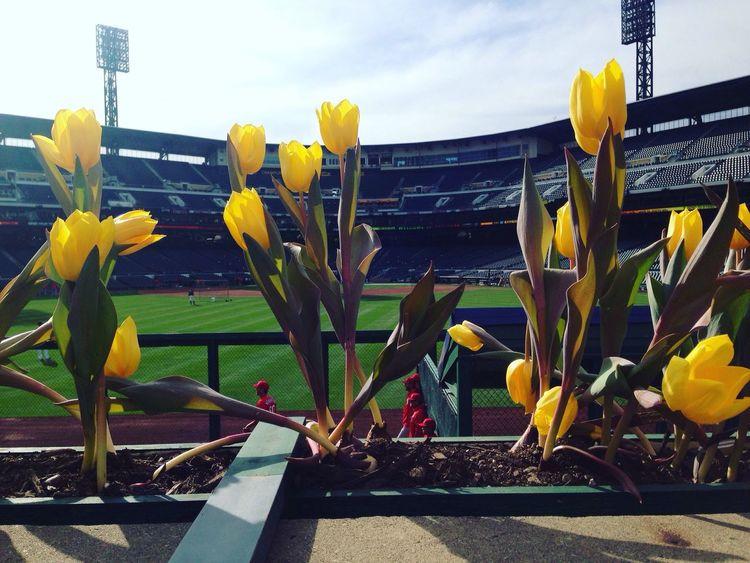 Baseball season is here PNC Park Pittsburgh Pittsburgh Pirates Springtime Flowers Baseball Baseball Field Baseball Season Showcase April