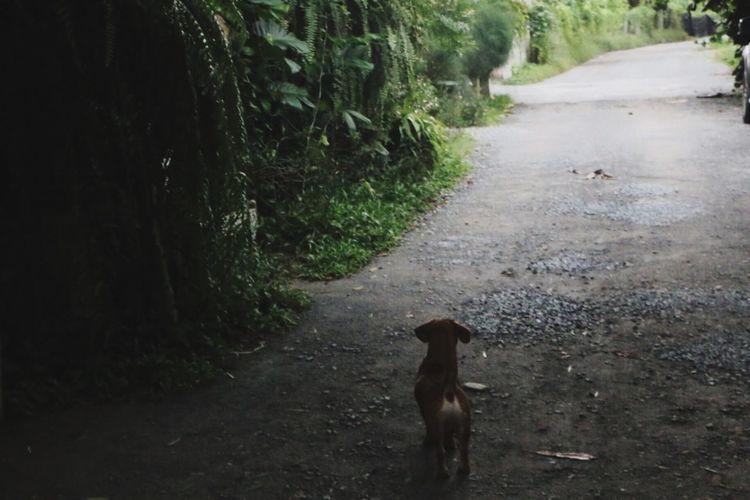 Puppy Lost Lost