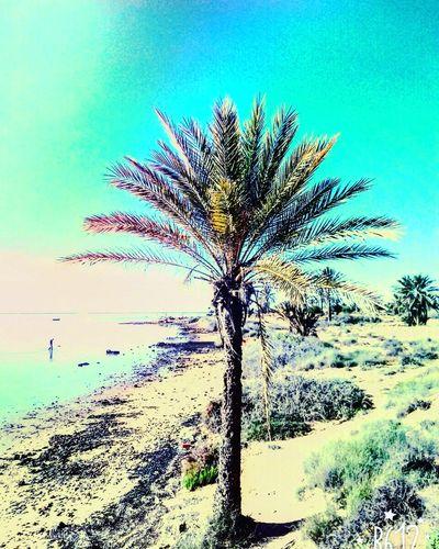 Tree نخلة Palmier  تونس جربة  ڨلالة هدوء Tranquility Beauty In Nature Nature Sea Day No People Outdoors خارج المنزل Nature Beach راحة شمس يوم مشمس