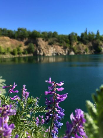 Water Quarry Flower Vicia Cracca Sommergefühle