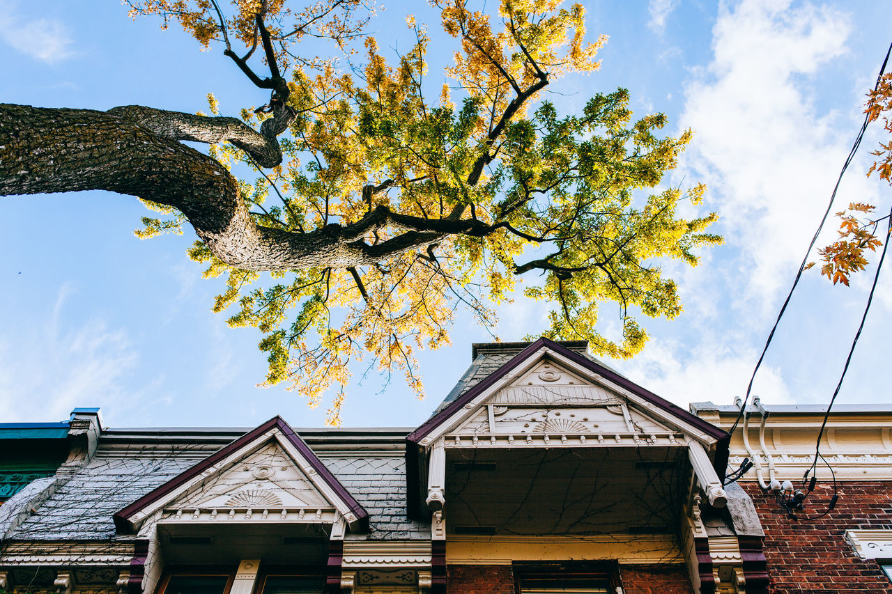 Low Angle View Of Tree And House Against Sky