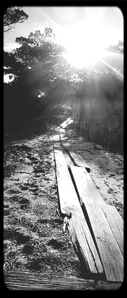 Blackandwhitephotography Fireisland Photowalk The Path Less Traveled By Pointer Footwear