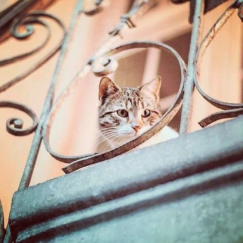 Cat In Colors Prostanaca