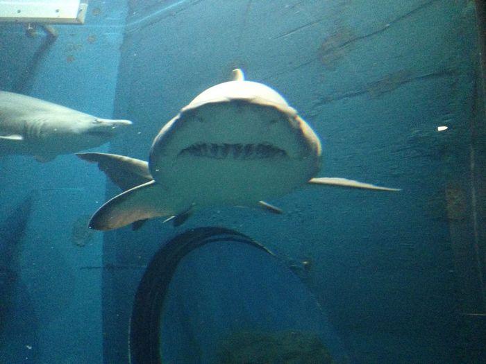 Shark in water Animal Wildlife Aquarium Blue Close-up Day Fish Illuminated Nature No People Ocean Sea Shark Turtle