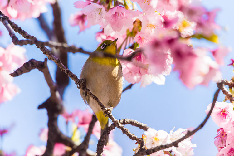 Close-Up Of Bird Perching On Flowering Tree
