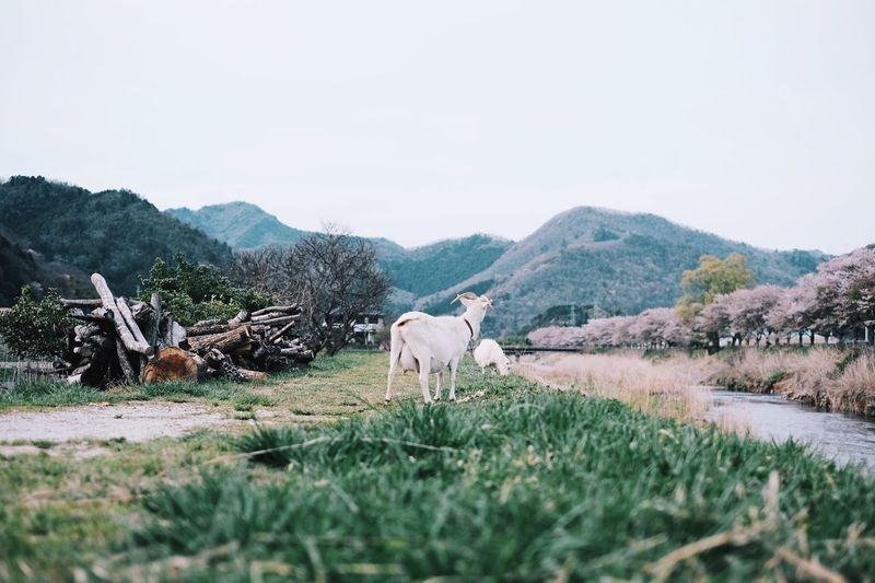 Showcase April EyeEm Best Shots Eye Em Nature Lover Japan