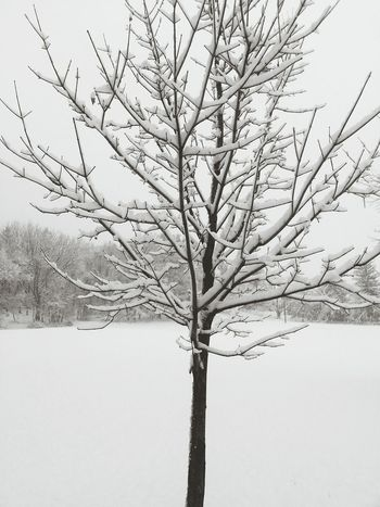 Relaxing Taking Photos My Job So Pretty February 2015 Snow Tree Its Cold Outside White Snow Minimal