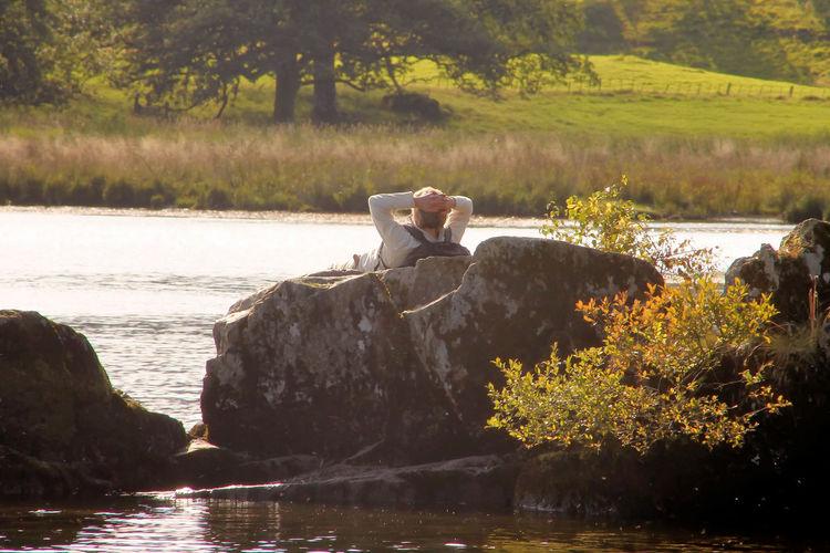 Swan perching on rock by lake
