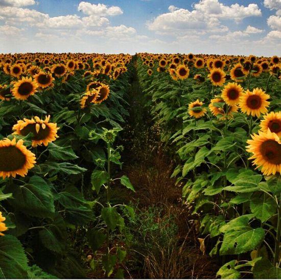 Günaydın☕🌻 Hello World That's Me Yellow Flower Goood Morning The Weekend Beuatiful Photo Happyday Word.