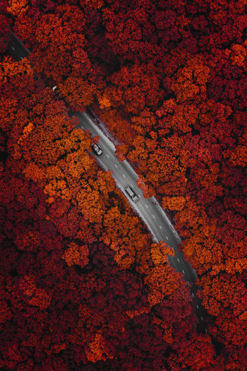 Red forest in russia