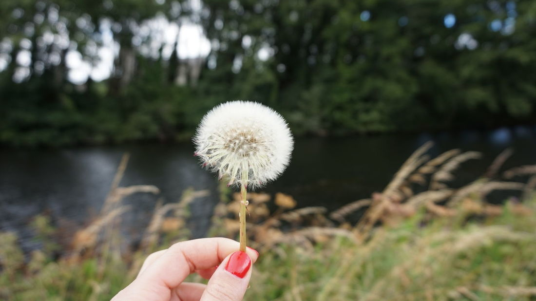 River View Close-up Dandelion Flower Head Focus On Foreground Fragility Holding Human Finger Human Hand Nature One Person Outdoors People Real People Tree Water