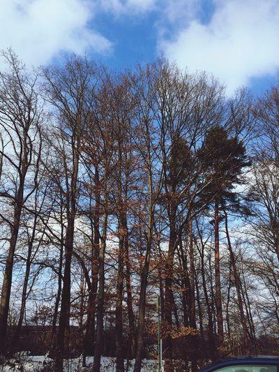 Trees Blue Sky Winter Wurzelwerk