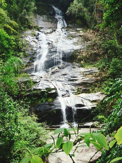 Water Walking Around Time To Reflect In The Forest Hiking Day in Tijuca's Forest Nature On Your Doorstep Sound Of Life