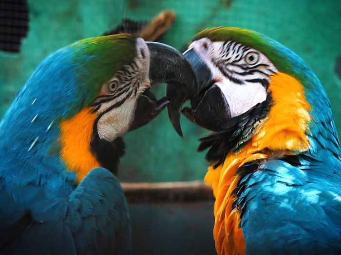 Close-up of two birds in love