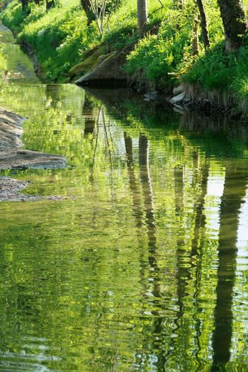 Reflection Water Lake Tree Plant Green Color Nature Tranquility No People Beauty In Nature Growth Forest Outdoors Day Waterfront Tranquil Scene Scenics - Nature